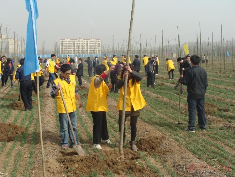 兖州志愿者植树活动