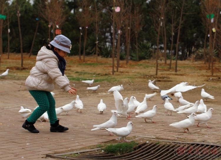 南山公园动物园-百鸟园