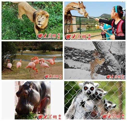 青岛森林野生动物世界有限公司位于青岛市黄岛