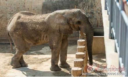 救救威海神雕山动物园的大象吧