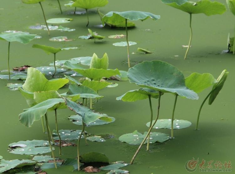 万亩荷塘游平原森林湿地风景区