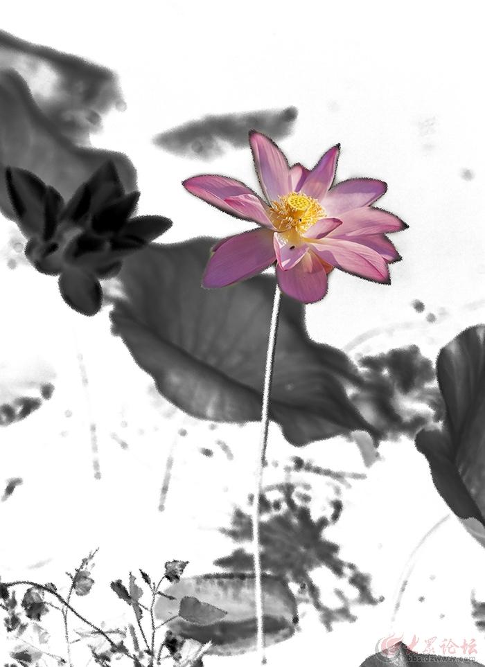 水墨荷花---还是爱湖图片