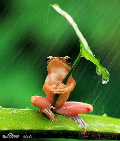 你还不如一只青蛙    发表于 2013-8-5 21:21