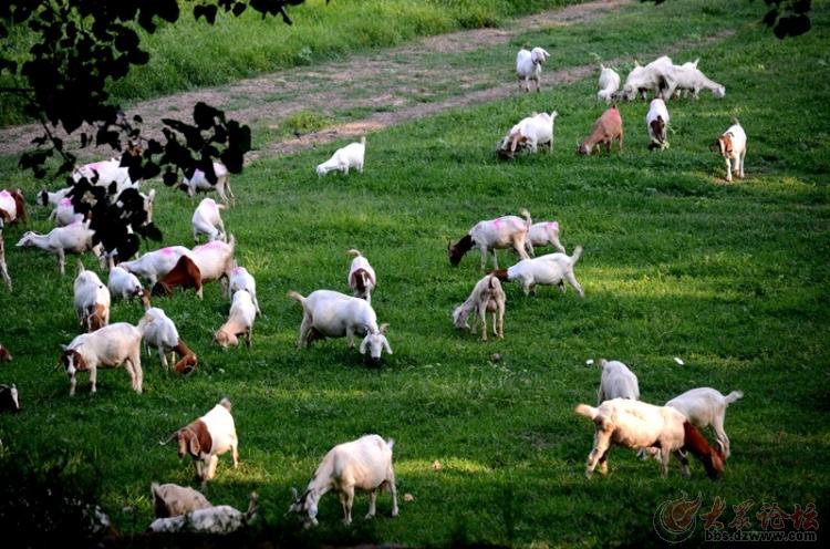 羊群大全可爱图片