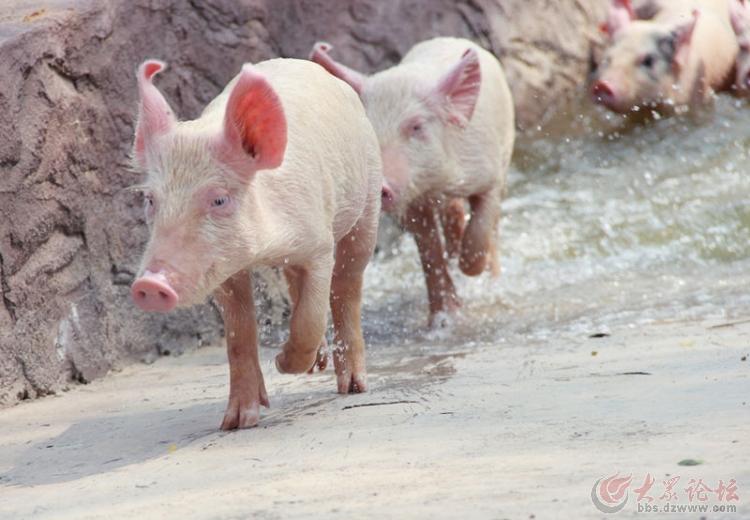 动物运动会 - 枣庄拍客