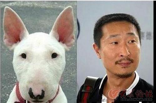 与动物撞脸的明星