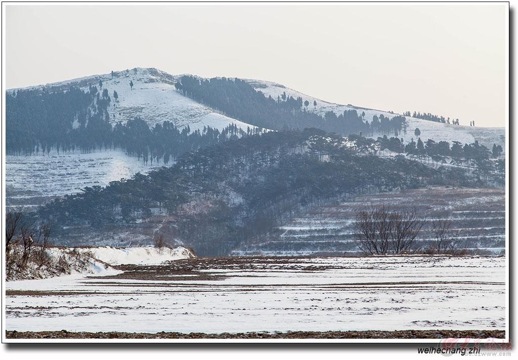 安丘山区雪景3.jpg