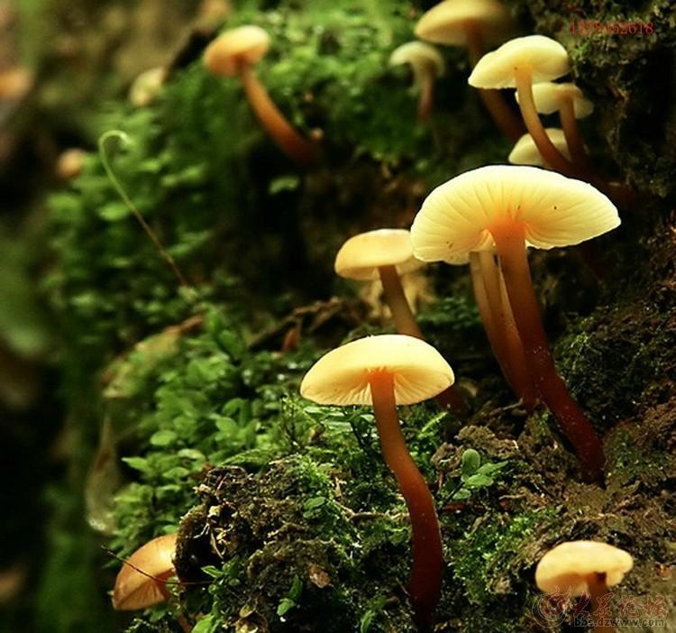长得像蘑菇的动物