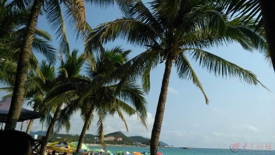 【单县】海南的椰树