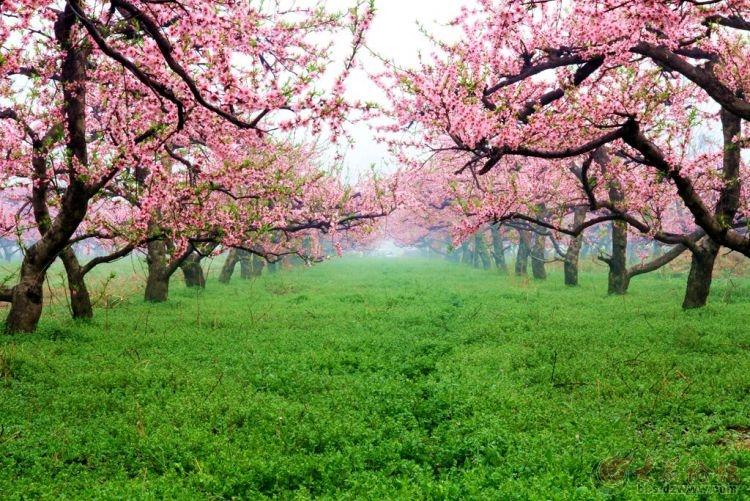 桃林水粉画 风景