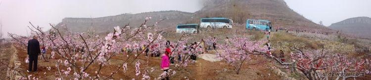 春光明媚邀筒子们来龟山风景区赏桃花!