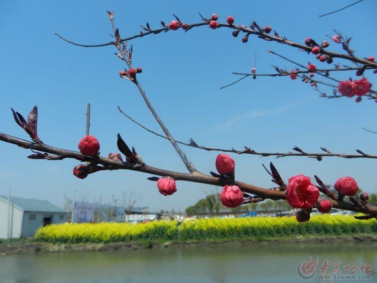 发几首赞美 春天的诗词 ,欢迎 朋友 们美图跟帖