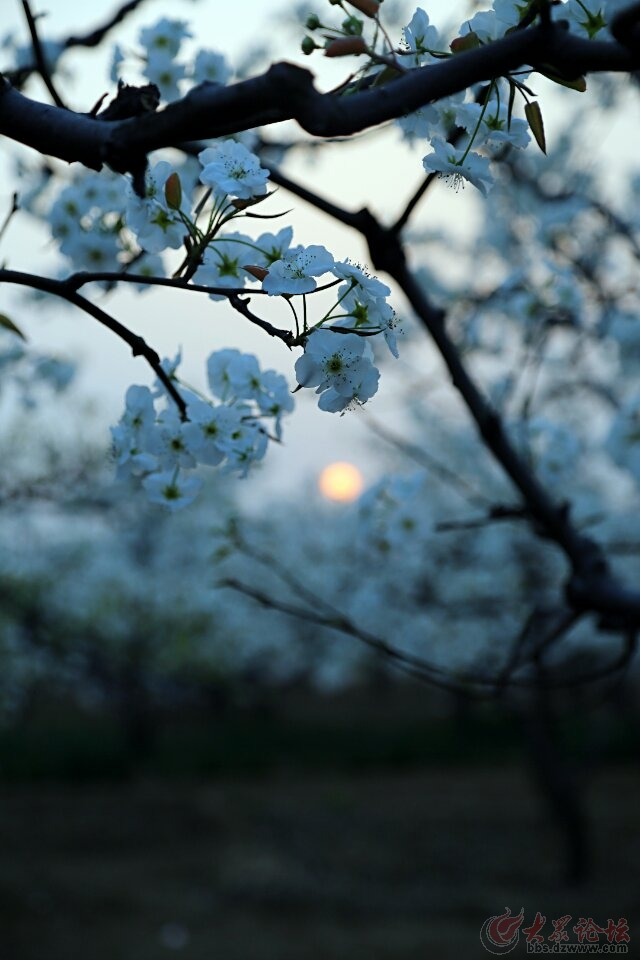 发几首赞美春天的诗词,欢迎朋友们美图跟帖