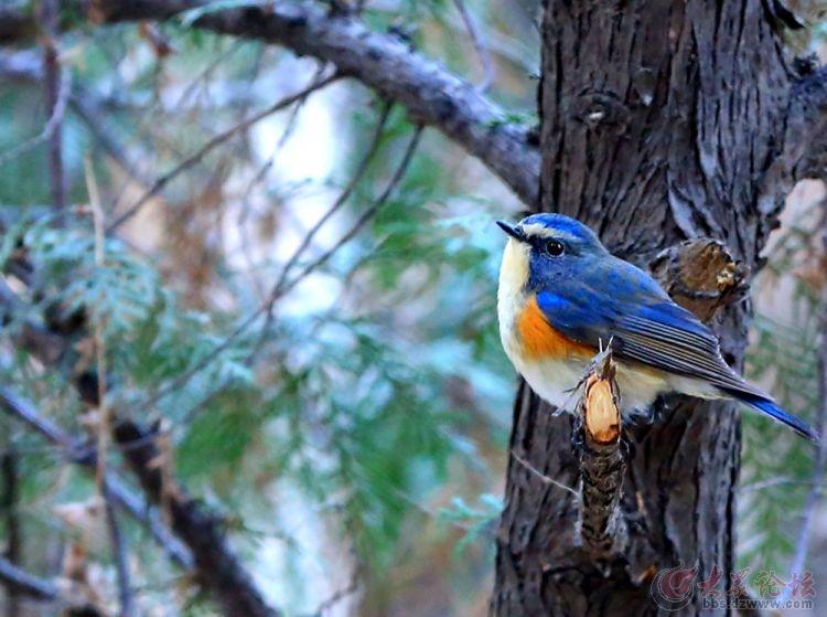 林中一小鸟