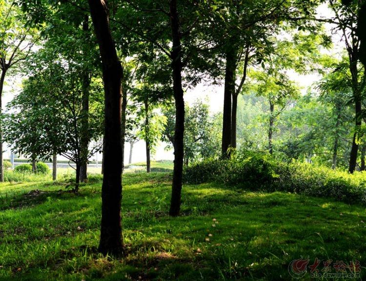 阳光照射小树林 - 凤鸣湖摄影沙龙