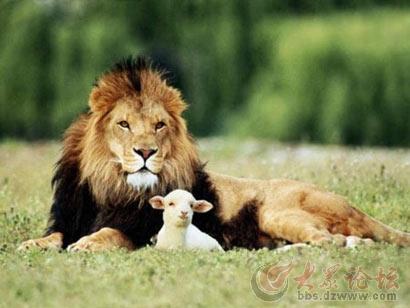 这是世界上最可爱的狮子吗?