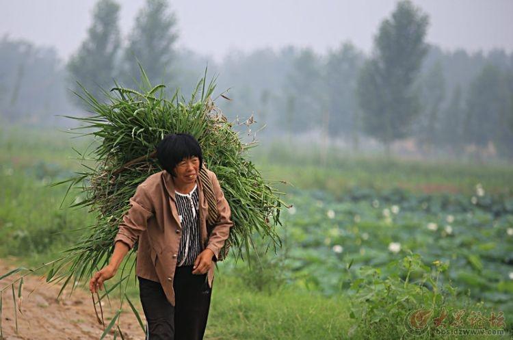勤劳的农家妇女