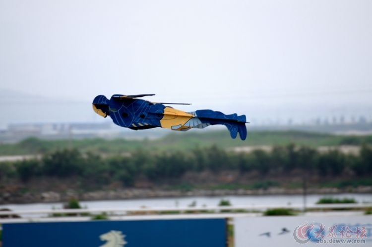 养马岛全国航模锦标赛