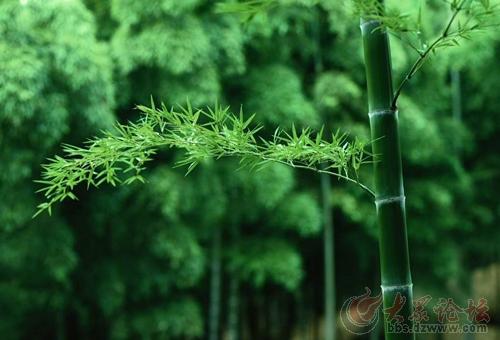 中国十大吉祥植物的寓意