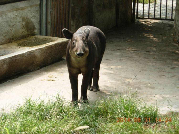 请说出照片中动物的名字----北京动物园