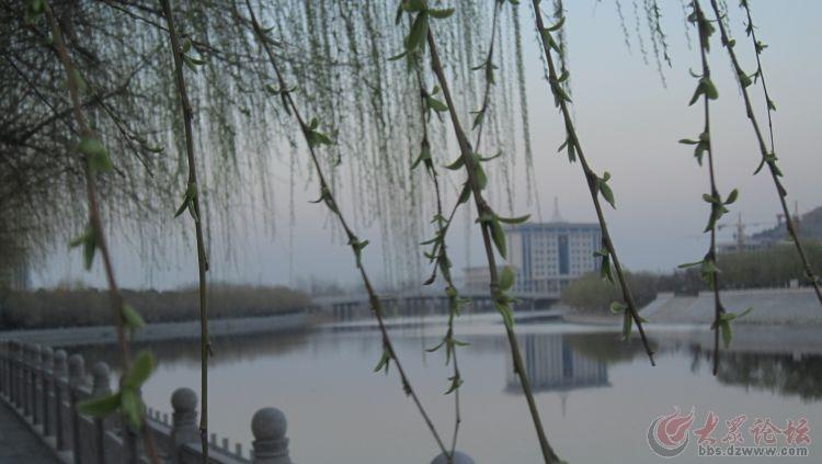 壁纸 垂柳 风景 柳树 摄影 树 桌面 750_423