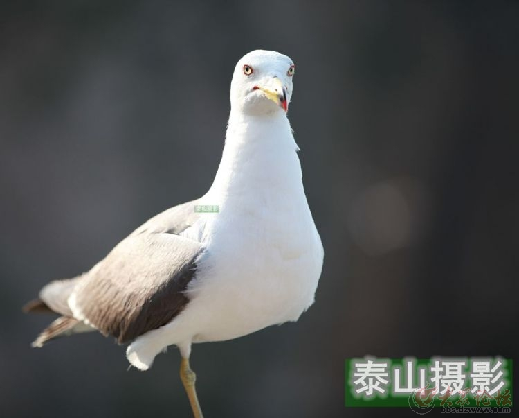 动物 鸟 鸟类 750