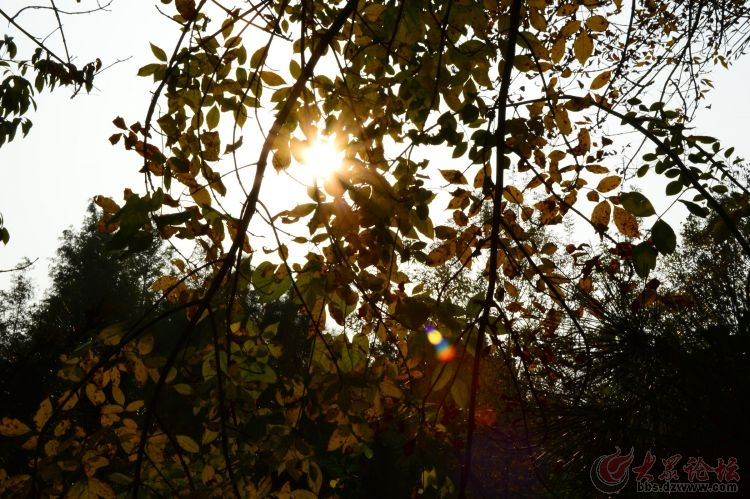 离别的秋天