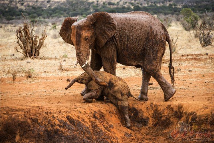 非洲草原上的动物天堂