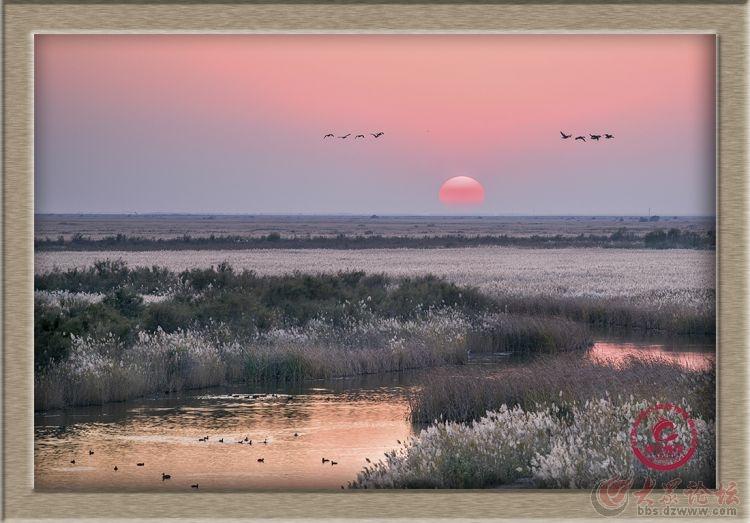 妙合无垠东营风光摄影:湿地夕照.jpg