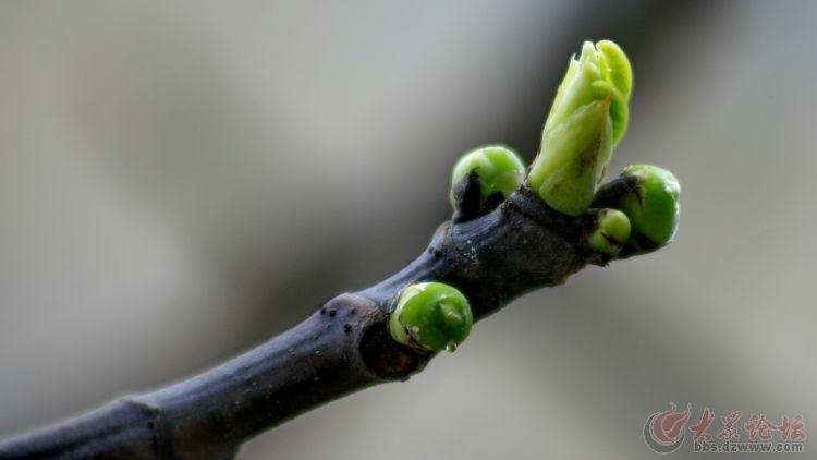 正的春回大地,草木发芽