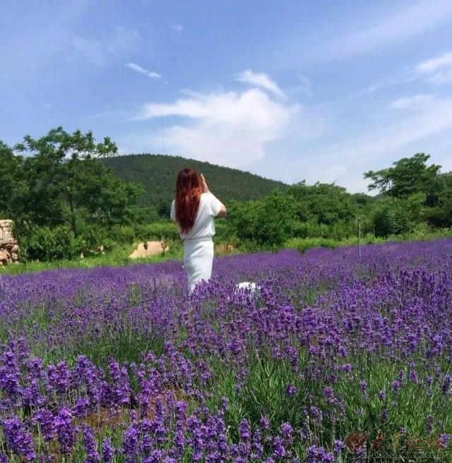 """紫海蓝山:徐州小""""普罗旺斯""""的诱惑"""