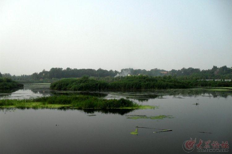 昌乐丹河湿地生态公园 - 潍坊拍客 - 大众论坛