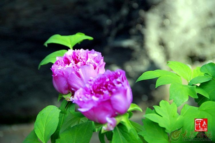 菏泽牡丹园 (13).jpg
