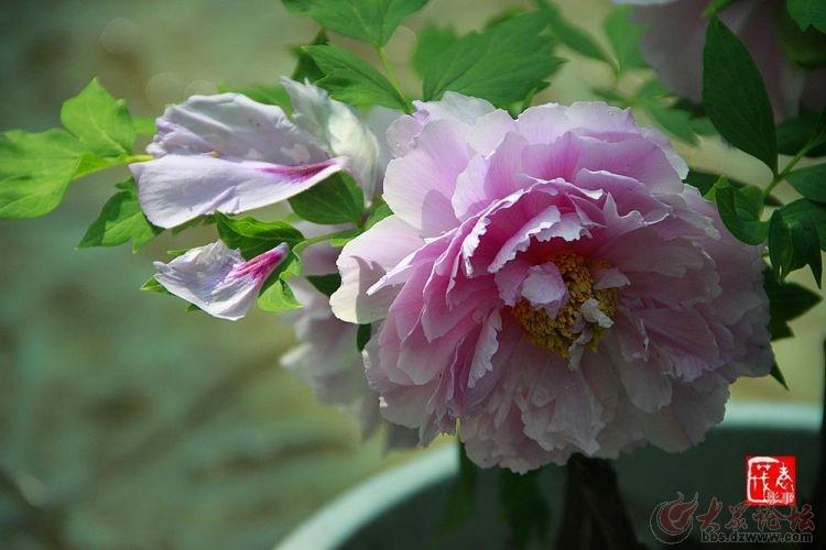 菏泽牡丹园 (17).jpg