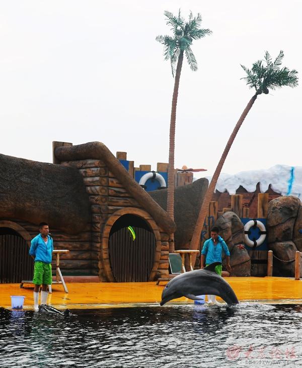 山海关乐岛海洋公园海狮海豚表演掠影