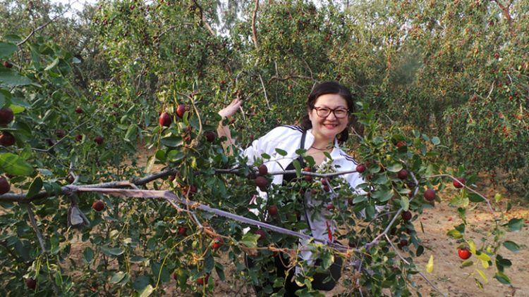 枣树的生长环境