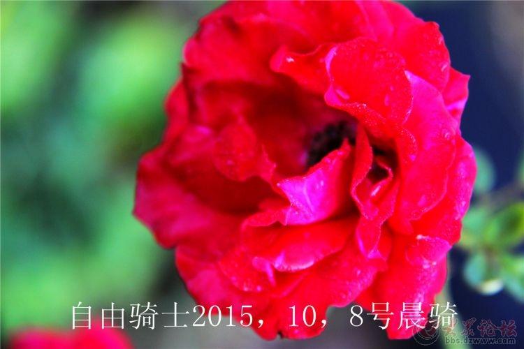 IMG_7912.jpg