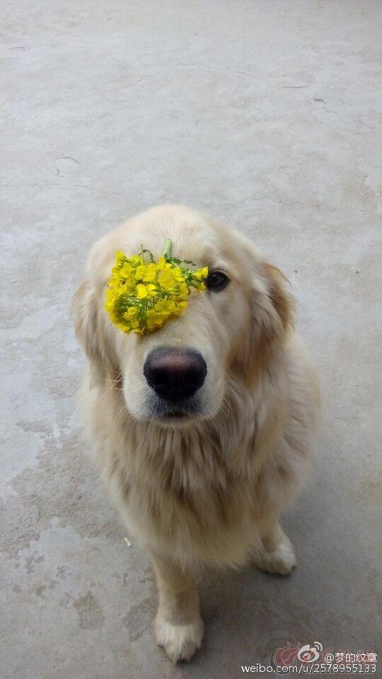 趴着的可爱狗狗图片