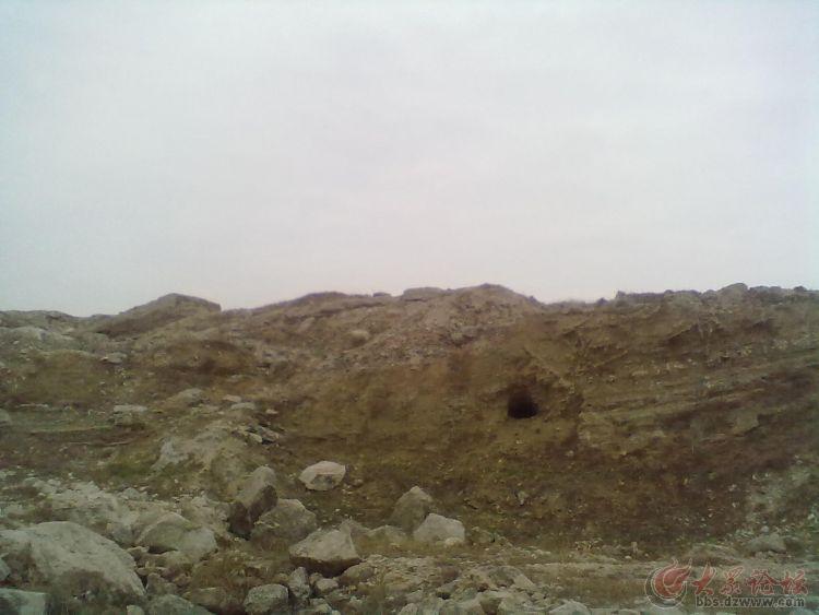 朝北的恐龙实体化石