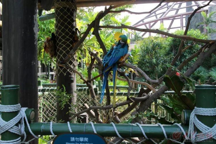 金刚鹦鹉 - 菏泽拍客