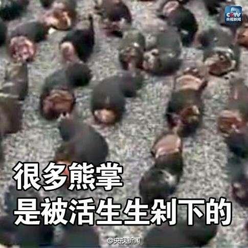微倡议:春节不食用受保护野生动物!为它们转!