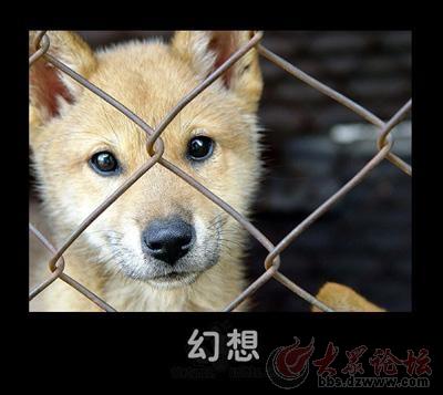 动物的可爱表情 - 鲁南论坛