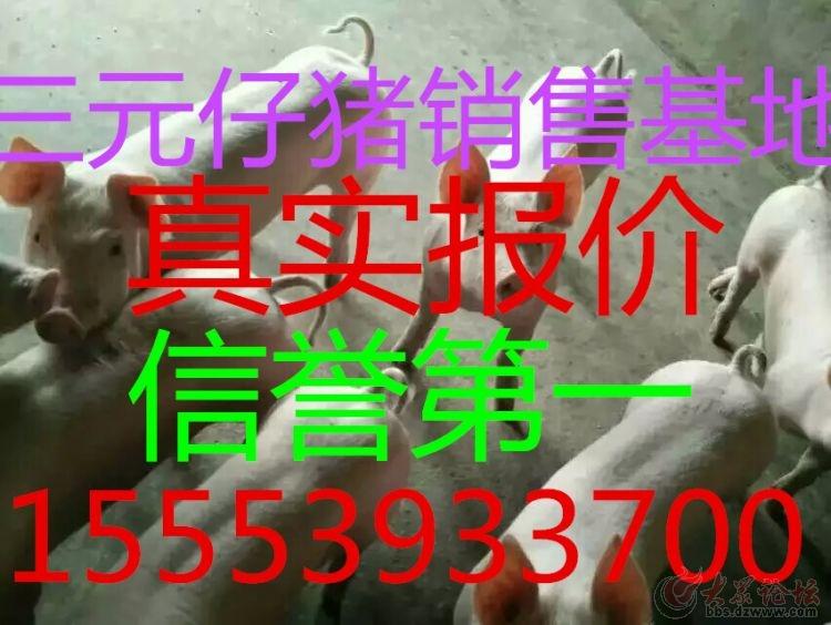 1457478375545.jpg