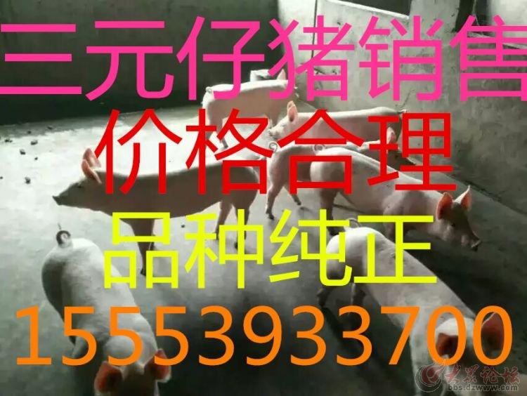 1457478362999.jpg