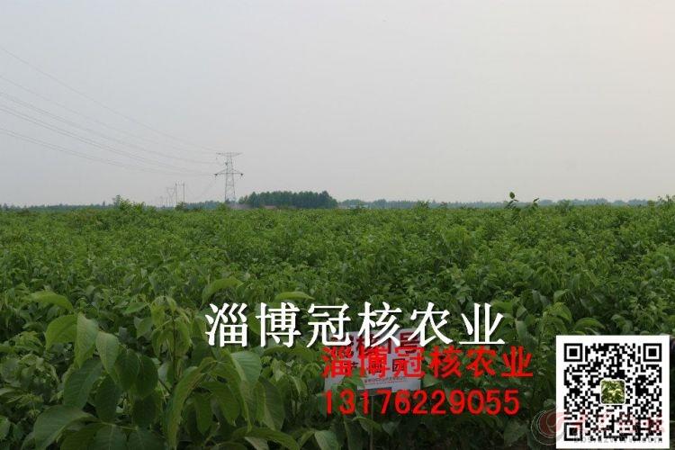 冠核1苗圃园.jpg