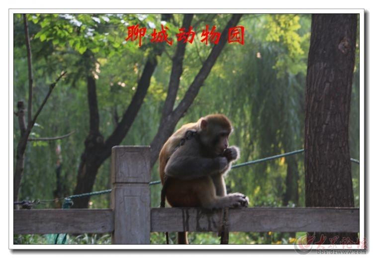 动物园05.jpg