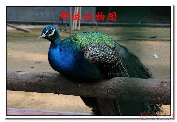 动物园08.jpg