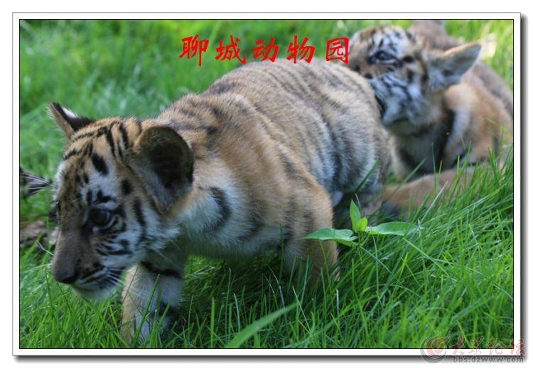 动物园10.jpg