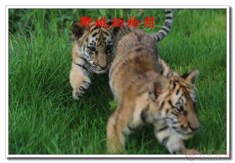 动物园09.jpg