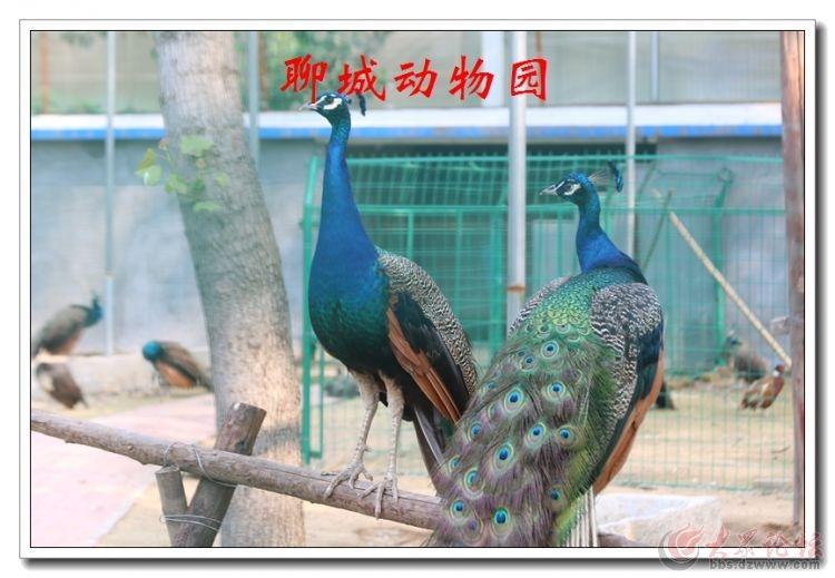 动物园11.jpg